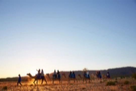 Join Pyndan Camel Tracks in Alice Springs for sunset on a relaxing one hour camel ride on our gentle camels led by experienced guides. A camel ride with the setting sun against the beautiful MacDonnell Ranges is an iconic Red Centre experience.